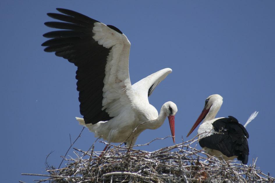 μεγάλο πουλί κάνει την κραυγή της νότια ινδική XXX βίντεο