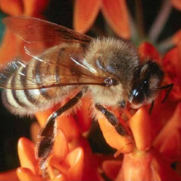 Το σύνδρομο της κατάρρευσης μελισσιών