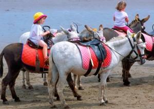 Μοναχοί εκτρέφουν αλογάκια που θα χρησιμοποιηθούν για θεραπευτική ιππασία σε παιδιά με σύνδρομο Down