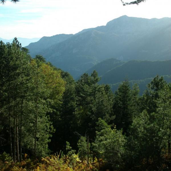 Η υποβάθμιση των ελληνικών δασών