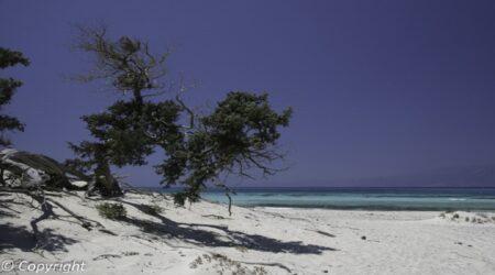 Νήσος Χρυσή (Γαϊδουρονήσι)