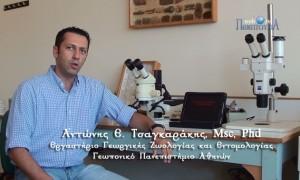 Η νέα τεχνική έρευνας της συμπεριφοράς των εντόμων
