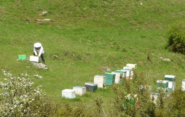 Η μελισσοκομία στην Ελλάδα και ειδικά στη Θεσσαλία