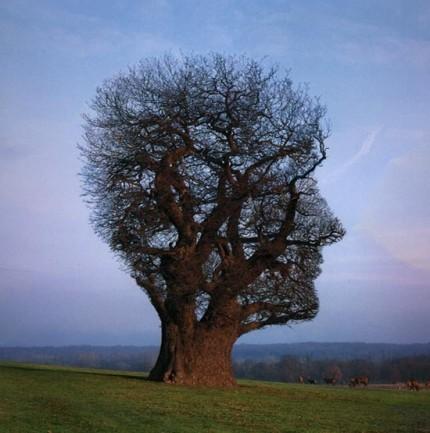 Tree_of_half_life η ελευθερία