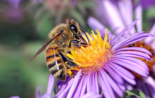 Μέλισσα και περιβάλλον