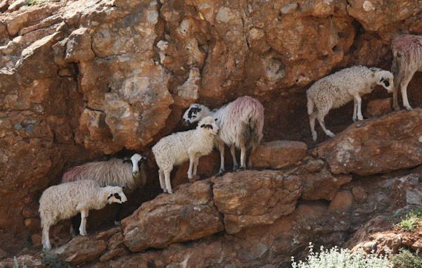 Ελληνική Κτηνοτροφία: σημερινή κατάσταση & προοπτικές ανάπτυξης