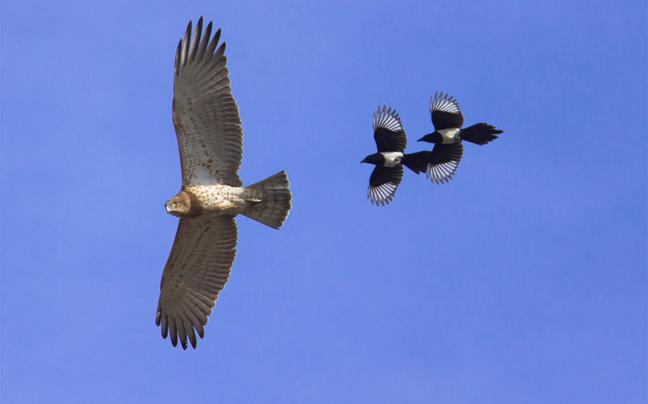 Πουλιά-και-αεροσκάφη-σε-παράλληλες