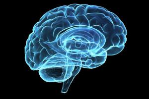 Θεωρία και πράξη στην μελέτη της νοημοσύνης (B')