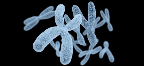 Chromosomes on black background