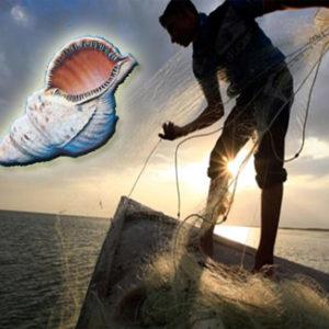 Η ψαροπούλα, οι ψαράδες και τα φρέσκα ψάρια τους