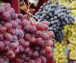 Παρομοιώσεις από εικόνες της φύσης που σχετίζονται με τον οίνο