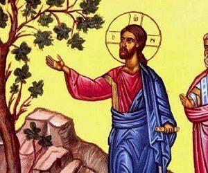 Η άμπελος στις παραβολές της Αγίας Γραφής