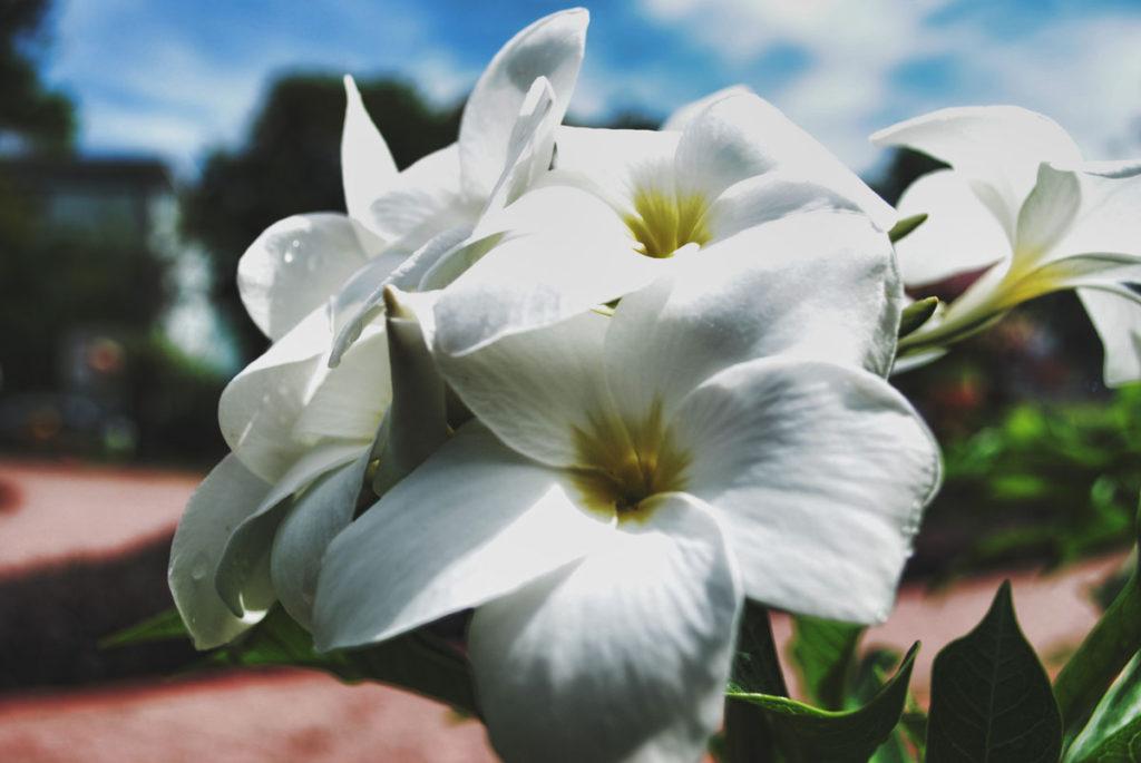 Άνθη: στον καμβά της φύσης…