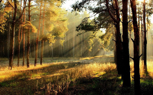 1_forestsunrise