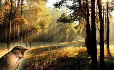 5_Aidoni_forestsunrise