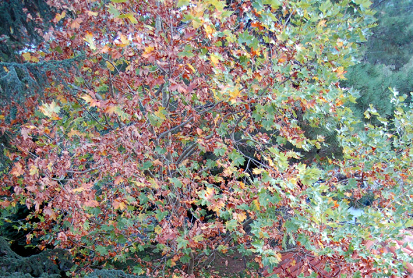 7_autumn