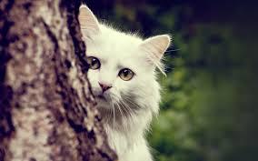 8_cat