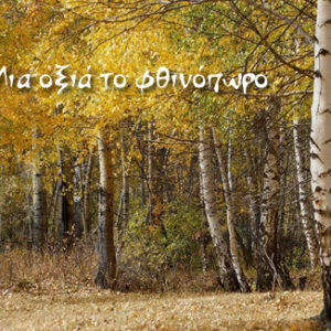 Μια οξιά το φθινόπωρο