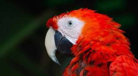 Πουλιά στο φυσικό περιβάλλον