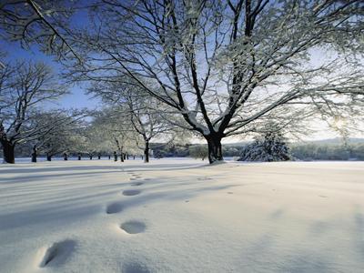 snowapotypomata