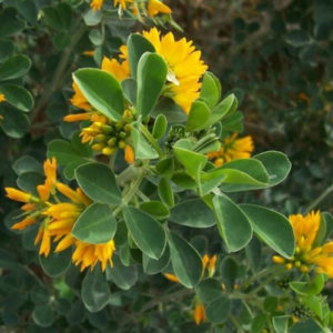 Καλλιέργειες με προοπτικές για τη Θεσσαλία