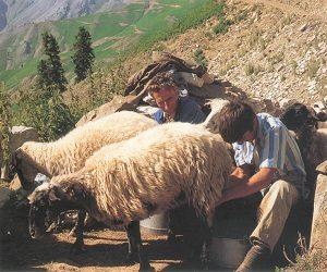 Τα κρεατάλευρα στην ελληνική κτηνοτροφία