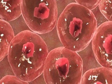 Χρήσεις των βλαστοκυττάρων
