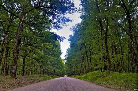 Της πατρίδας μου τα δάση
