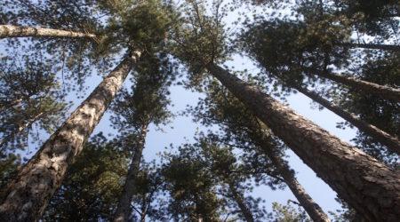 Στην Βάλια Κάλντα αρχή της Ινδίκτου και Ημέρα Προστασίας του Περιβάλλοντος