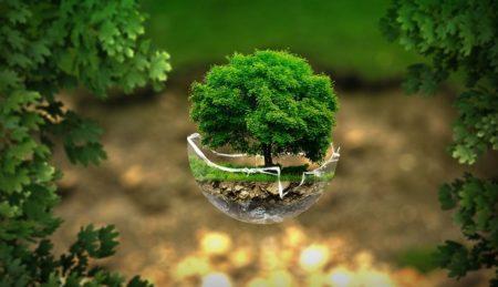 Ορισμός και ιστορία της Οικολογίας