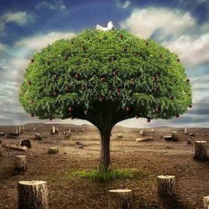 Πατριαρχικά μηνύματα για την ημέρα προστασίας του περιβάλλοντος