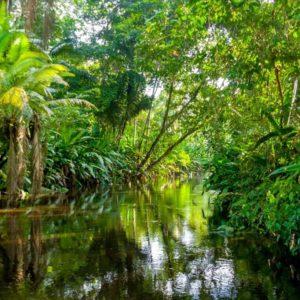 Αμαζόνιος – ποταμός ζωής