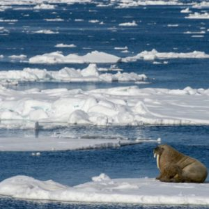 Αρκτική. Καθρέπτης της ζωής